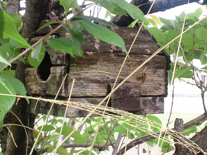 手作り巣箱とハチ