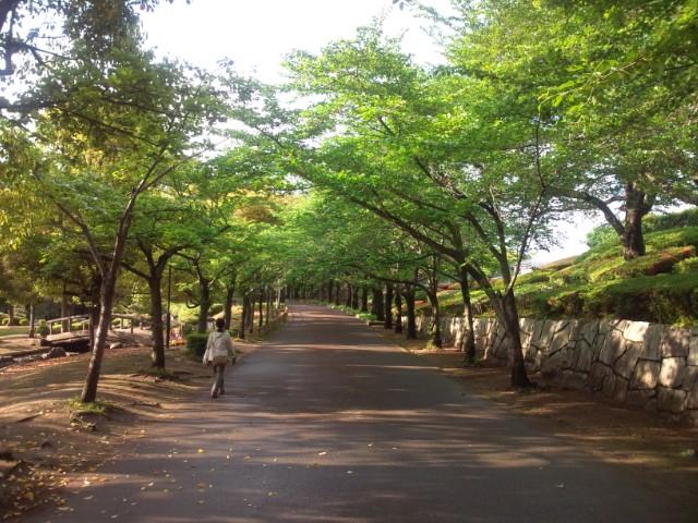 青葉の桜並木