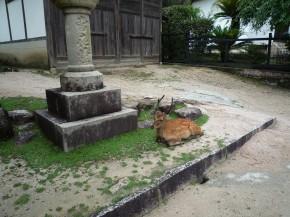 厳島 鹿2